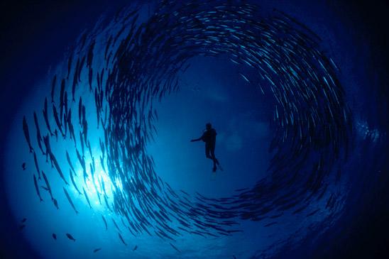 Υποβρύχια φωτογραφία…το Έβερεστ των φωτογράφων!