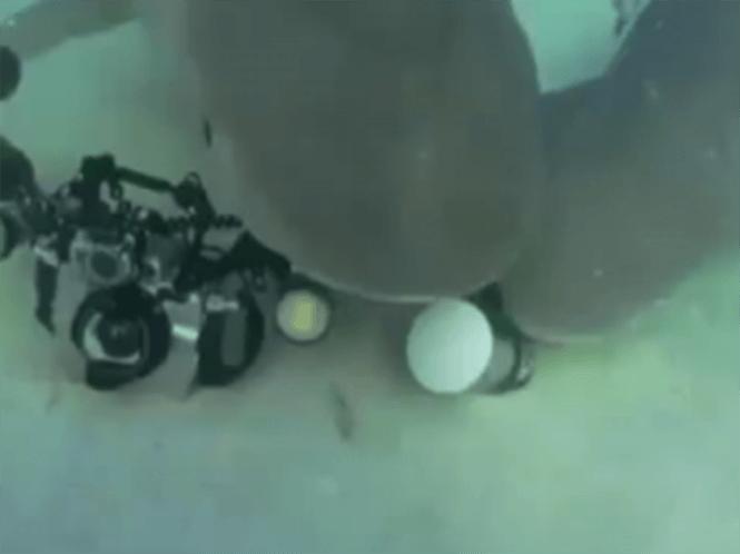 Καρχαρίας κλέβει υποβρύχια φωτογραφική μηχανή αξίας $15.000
