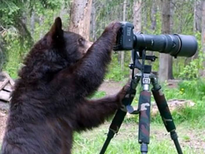 Η αρκούδα φωτογράφος