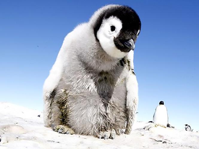 Πιγκουίνοι προσέχετε. Οι κατασκοπευτικές κάμερες του BBC είναι εδώ
