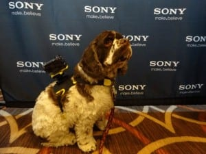 Sony animal mount