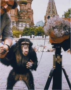 Chimpanzee photographer PTTL