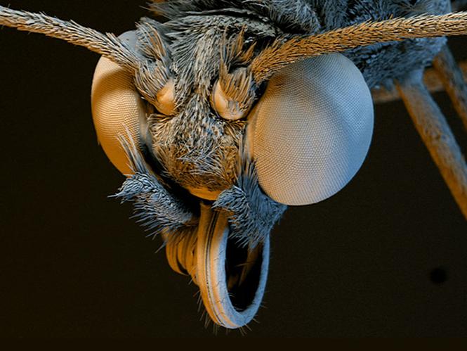 Μικροσκόπιο αποκαλύπτει σε video εκπληκτικές λεπτομέρειες εντόμων και φυτών
