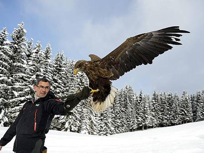 Αετός με κάμερα πετάει πάνω από τις Άλπεις. Δείτε το video