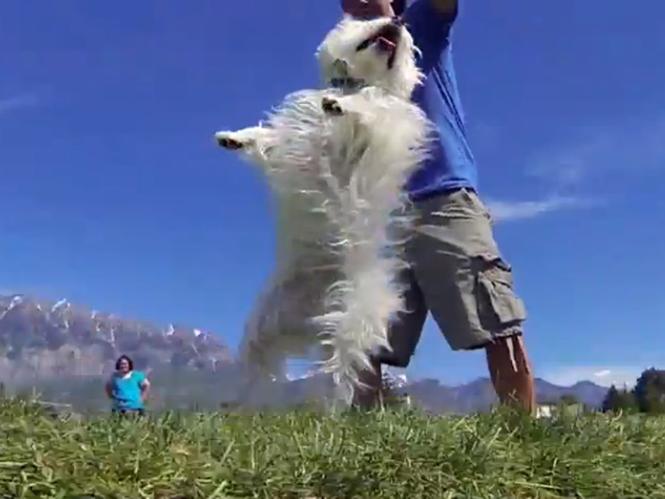 Μια ντουζίνα σκύλων, 52 GoPro κάμερες και ένα video σε στυλ Matrix