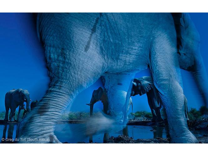 Αυτοί είναι οι νικητές του Wildlife Photographer of the Year 2013