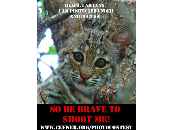 Wild Click Photo Contest 2013