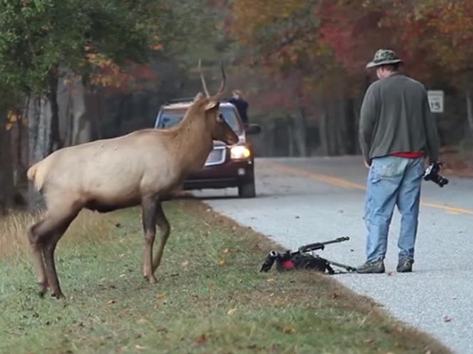 Σκότωσαν το ελάφι που έγινε διάσημο μέσω της αντιπαράθεσης του με φωτογράφο οι αρχές του Εθνικού πάρκου στις Η.Π.Α.
