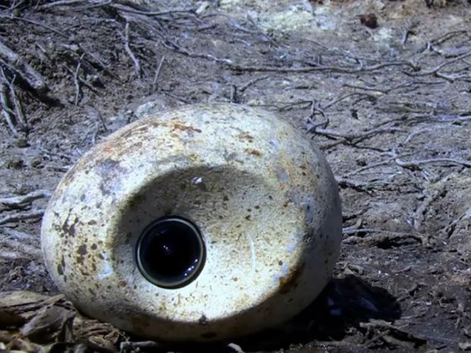 Πουλί κλέβει κάμερα-αυγό και καταγράφει μοναδικά πλάνα αποικίας πιγκουίνων
