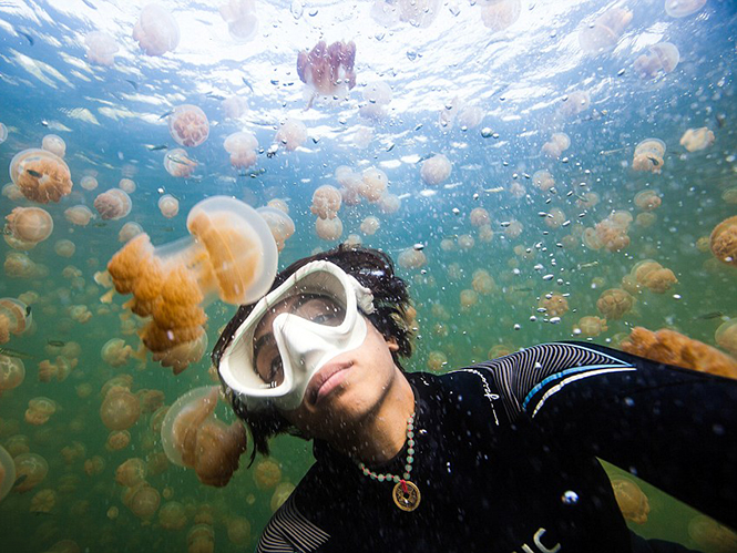 Φωτογράφος βρίσκεται στην μέση μίας θάλασσας από μέδουσες και καταγράφει μοναδικές εικόνες