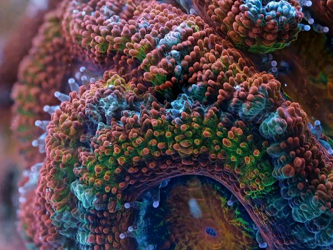 Slow Life: κοράλλια και σφουγγάρια σε μοναδικό Time Lapse video