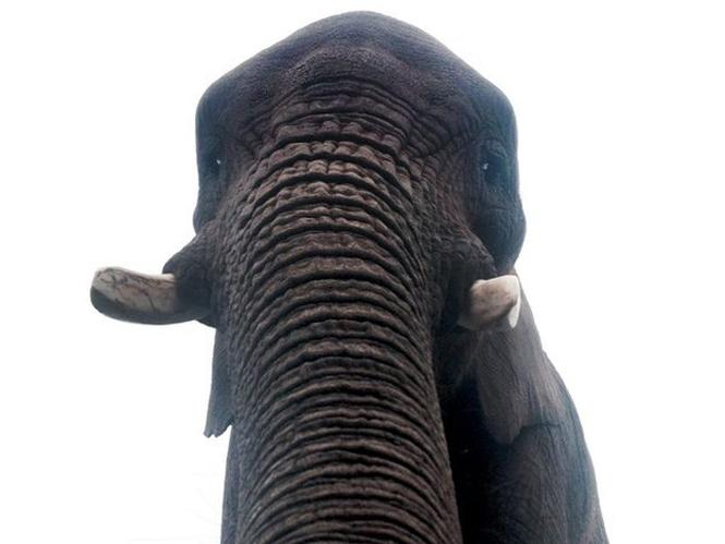 Η πρώτη selfie από ελέφαντα είναι γεγονός και έγινε με προβοσκίδα
