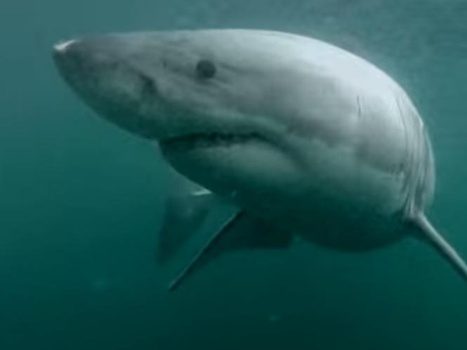 Βάζεις την GoPro στο κεφάλι, βουτάς στο νερό και βρίσκεσαι μπροστά σε ένα λευκό καρχαρία