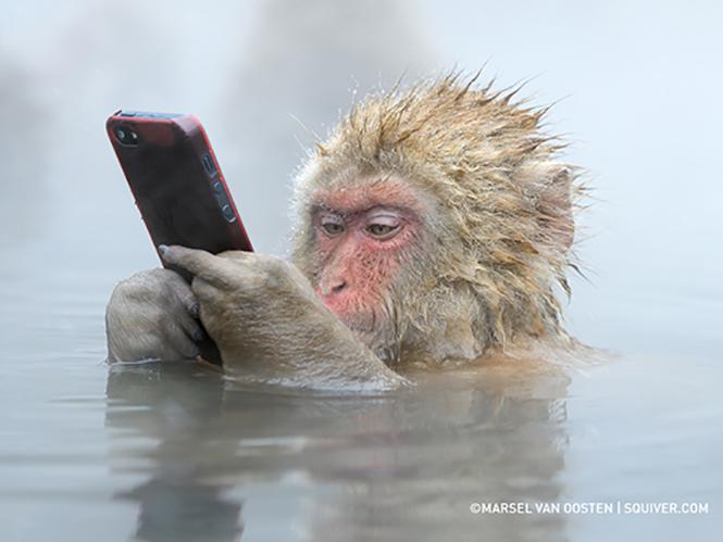 Μία μαϊμού, ένα iPhone και μία εκπληκτική εικόνα