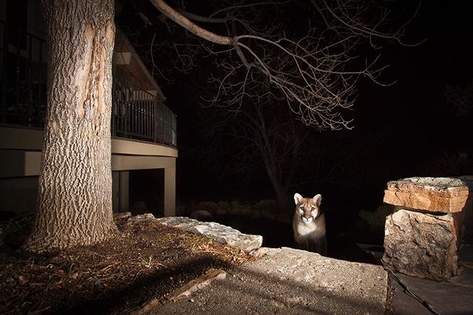 Beast in the Garden, Boulder, Colorado, Η.Π.Α.