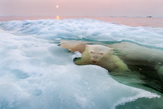 The Ice Bear, Hudson Bay, Manitoba, Καναδάς