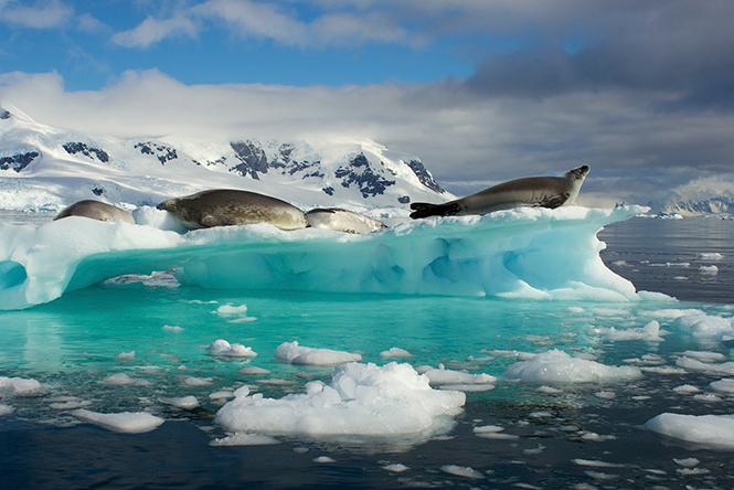 Seals On Iceberg, Ανταρκτική