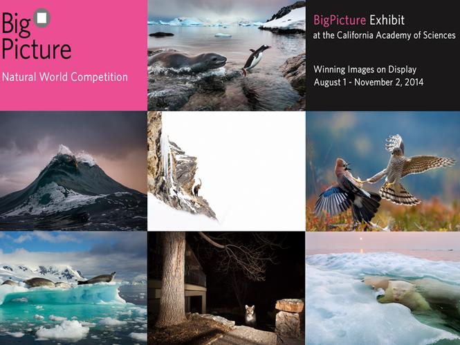 Big Picture, ανακοινώθηκαν τα αποτελέσματα του διεθνούς διαγωνισμού για τον φυσικό κόσμο