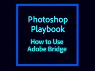 adobe-bridge-tutorial