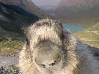 marmot-gopro