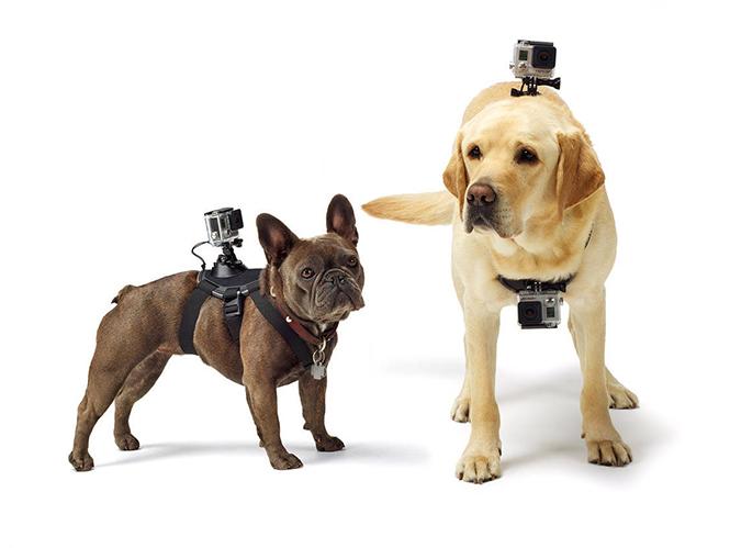 Fetch, νέο mount από την Gopro για το σκυλί σας