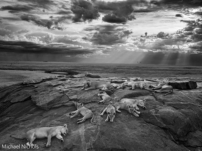 Ανακοινώθηκαν οι νικητές του Wildlife Photographer of the Year 2014