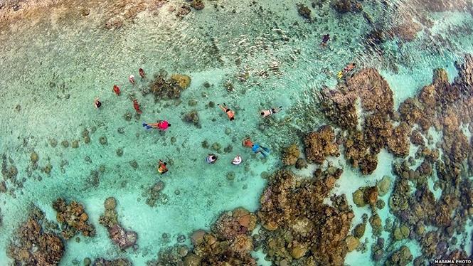 Coral Garden in Tahaa's Lagoon, French Polynesia