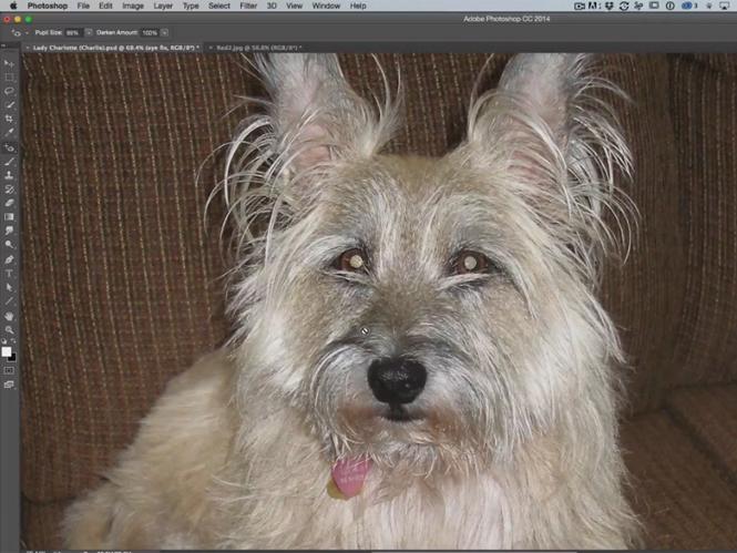 Πως να διορθώσετε τα μάτια του σκύλου σας στο Adobe Photoshop