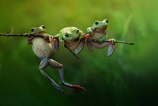 ©Harfian Herdi, Indonesia, Shortlist, Nature &Wildlife, Open, 2015 Sony World Photography Awards