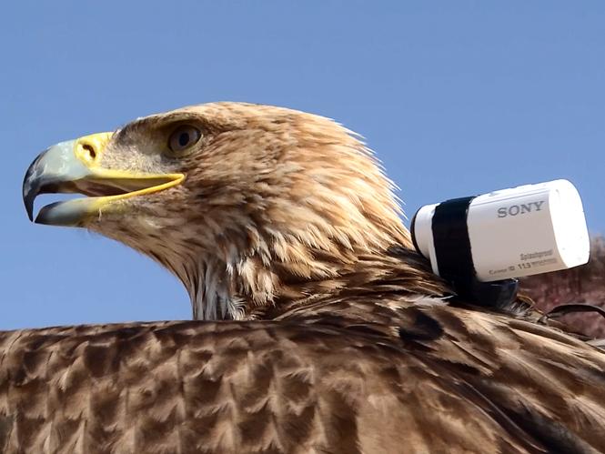 Αετός πετάει από το ψηλότερο κτίριο στον κόσμο παρέα με μία action camera