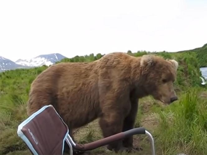 Φωτογράφος έρχεται πολύ κοντά σε αρκούδα