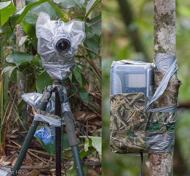 Camera Trap Tambopata