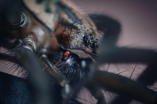 Sony A7R II, καταγράφει τα έντομα που ξεχειμωνιάζουν στο σπίτι μας