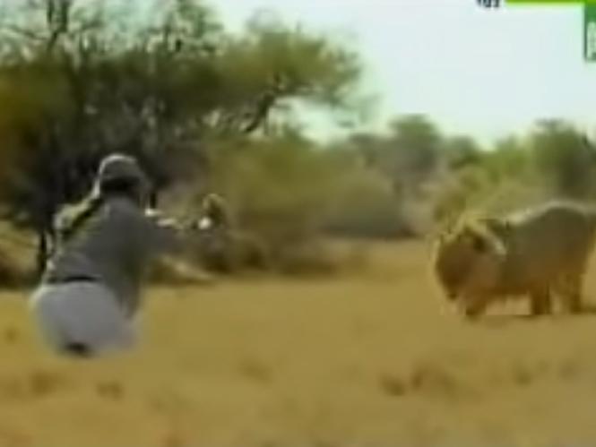 Φωτογράφος άγριας ζωής αντιμετωπίζει τα λιοντάρια με χαρτί υγείας