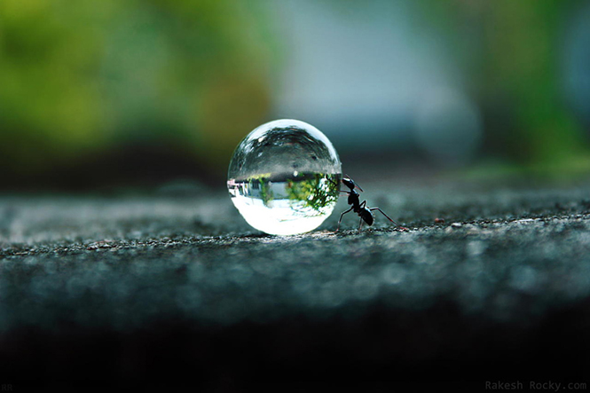The Ants Dream by Rakesh Rocky
