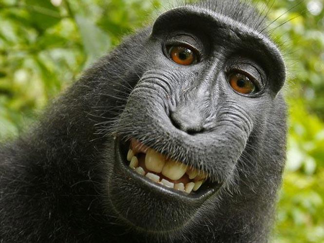 Κέρδισε τη μάχη απέναντι στη PETA ο φωτογράφος των μαϊμουδο-selfies