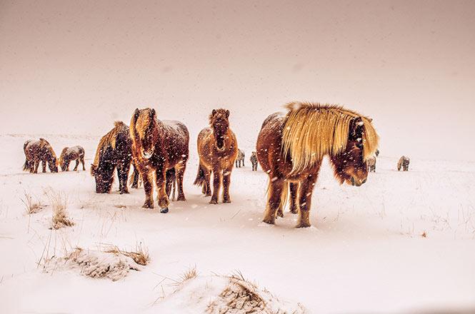 Nick_Kontostavlakis_Greece_Shortlist_Open_Nature-and-Wildlife_2016