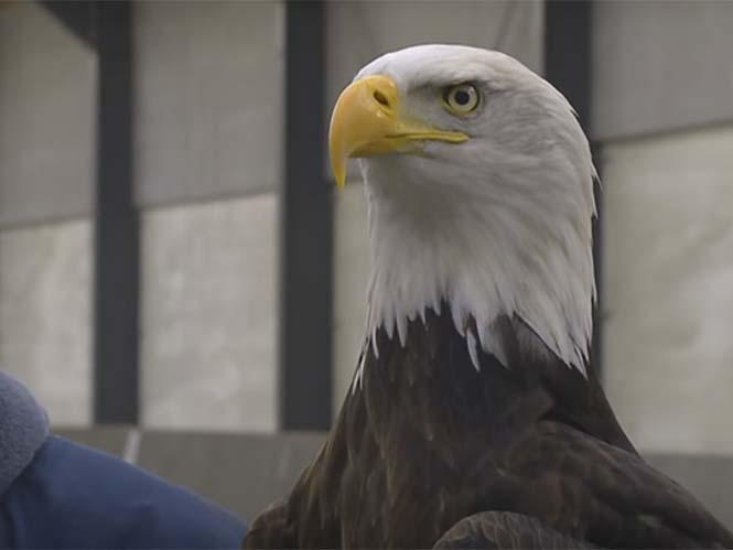 Αετοί εναντίον drones στην Ολλανδία