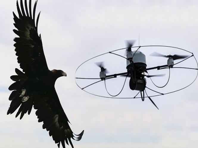 Διεθνής διαμαρτυρία για την χρήση αετών εναντίον drones