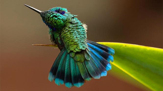 Green Violetear. Photo: Barbara Driscoll/Audubon Photography Awards