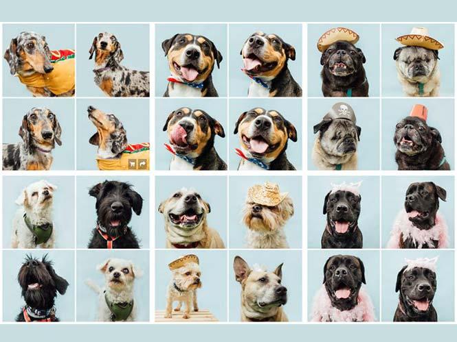 PET Photo Booth, ένα project μόνο για σκύλους