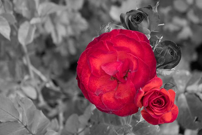selective-color-image