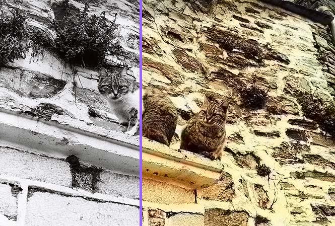 rendered-comparison-(2)