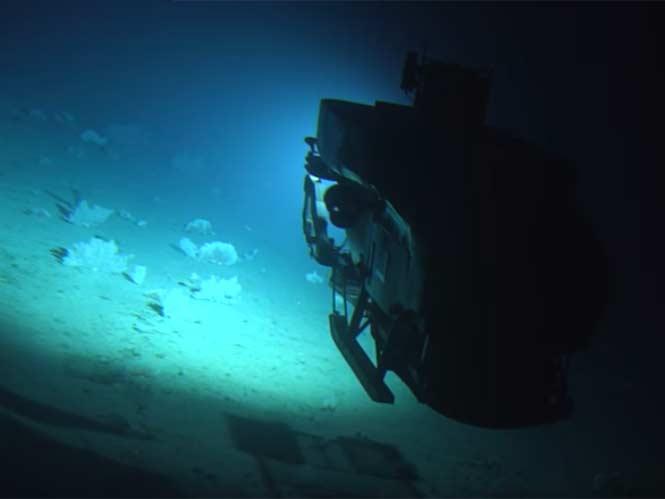 Canon ME20F-SH: Κατέγραψε για πρώτη φορά κοράλλια που λαμπυρίζουν στο σκοτάδι με 4 εκατομμύρια ISO