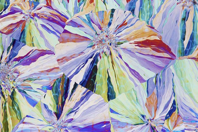 Φωτογραφία κρυσταλλωμένης σαλικίνης που εξάγεται από τον φλοιό της Ιτιάς. David Maitland, Ηνωμένο Βασίλειο