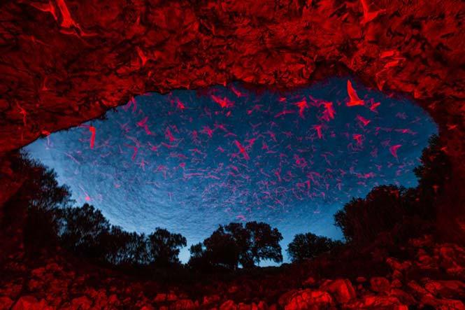 Μερικές από τις 20 εκατομμύρια νυχτερίδες που έφτασαν στο Τέξας για αναπαραγωγή. Karine Aigner, Η.Π.Α.