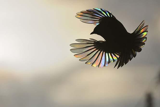 Το πέταγμα ενός πτηνού. Victor Tyakht, Ρωσσία