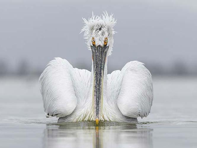 Wildlife Photographer of the Year: Ψηφίστε για το βραβείο κοινού