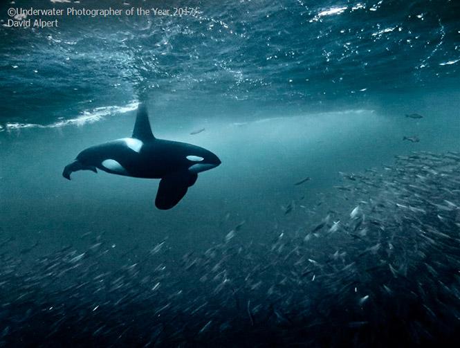 Compact THIRD: Orca by David Alpert