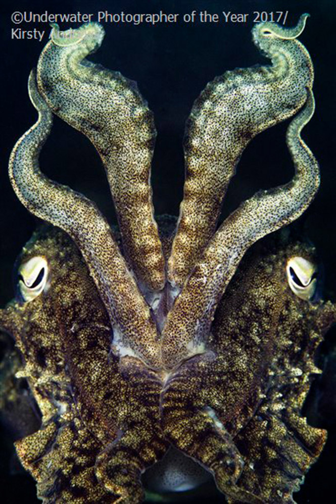 British Waters Macro WINNER: Dragon display by Kirsty Andrews